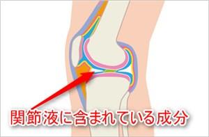膝の断面図