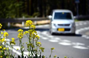 春のドライブ